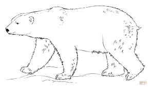 Small Picture Polar Bear Colouring Page Coloring Coloring Pages
