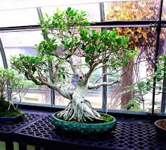 1000 images about plant tree care on pinterest bonsai trees types of bonsai trees and indoor bonsai tree bought bonsai tree