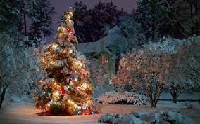 1920x1200 Outdoor Christmas tree ...