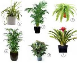 Non Toxic House Plants For Cat Parents Skinny Ms House Plants And