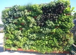garden photo frames. Garden Frame Vertical Herb On A Modular Living Wall Systems By Live Got Photo Frames