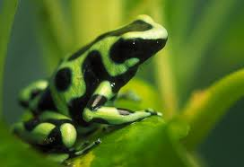 Image result for political frogs available – at a dime a dozen