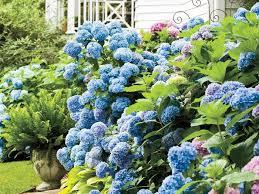 best garden plants. Interesting Best Hydrangea Garden With Best Garden Plants S