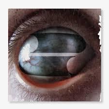 <b>Filter</b> - <b>Crazy Eyes</b> (CD) – Craft Recordings