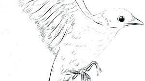 Printable Realistic Bird Coloring Pages Bird Coloring Pages For Kids