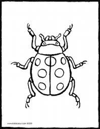 Lieveheersbeestje Kiddicolour