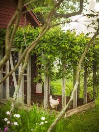 3 Easy Tips On Keeping Your Chickens Happy In The Summer U2014 Types How To Keep Backyard Chickens