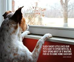 Quotes About Dogs And Friendship Inspiration 48 Of The Best Dog Inspired Quotes Puppy Leaks