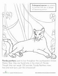 florida panther coloring page animals florida panther worksheet education com on states worksheets