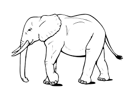 Elephant Coloring Pages Free To Print Coloringstar
