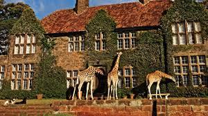 Image result for giraffe lodge
