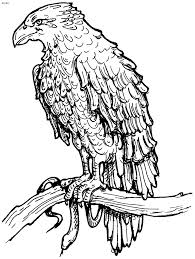Awesome Coloring Page Of An Eagle Ideas Printable Cosy Aligator