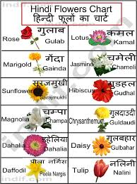 Flower Chart In English