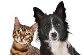 cat and dog veterinary hospital in garden grove ca