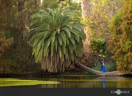17 los angeles county arboretum and botanic garden