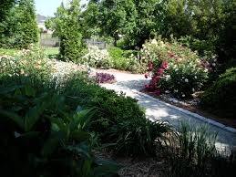 Pruning should improve growth, form, and flowering of landscape plants.