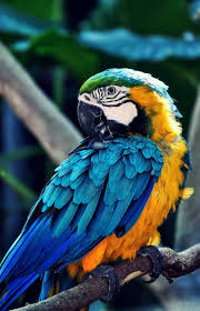 Parrot Mobile Wallpapers - Wallpaper Cave