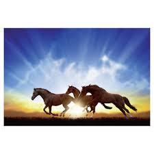 horses running in the sunset. Wonderful Horses 24 In Horses Running The Sunset H