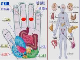 Sujok Therapy Points Chart Freeware Sujok Acupressure Points Chart Acupressure Point Chart For