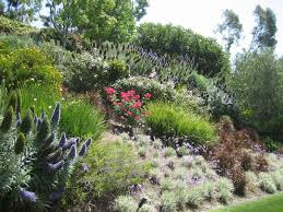 Steep Hill Garden Design Swaths Of Color On A Slope Looks Like Pride Of Madeira
