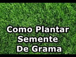 Existem diversos tipos de grama e formas. Como Plantar Semente De Grama Para Jardim Paisagismo Vasos Youtube