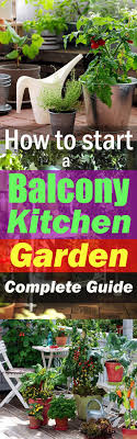 Ornamental Kitchen Garden How To Start A Balcony Kitchen Garden Complete Guide Balcony