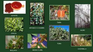 Animales Y Plantas De Per Plantas Tint Reas O Colorantes Del Per