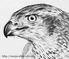 Disegno A Matita Animali Disegni In 2019 Animal Drawings