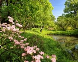 preview wallpaper spring branches colors wood trees pond water