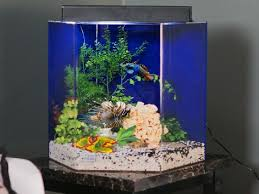 Jenis Kaca Aquarium