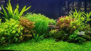 live aquarium plants you and your fish