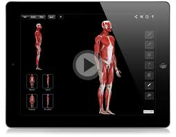 Muscle Chart Template Adorable Muscle System Pro 4444D44Medical