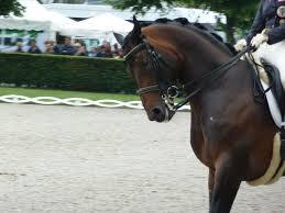 Pferdesport Das Stille Leiden Der Pferde