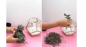 how to create a diy succulent terrarium