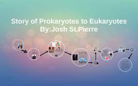 story of prokaryotes to eukaryotes by