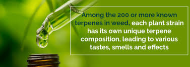 medicinal properties marijuana