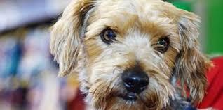 petsmart animals dogs.  Animals PetSmart Charities Presents Jim And Spike  Dog Adoption Stories And Petsmart Animals Dogs