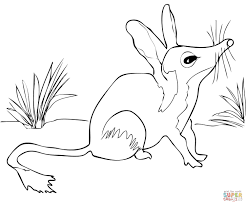 Small Picture Australian Bilby coloring page Free Printable Coloring Pages