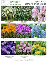 Small Picture Garden Design Garden Design with Plant spring bulbs The time is