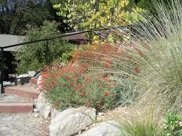 native garden in sierra city by c weiner