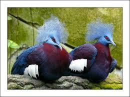 Fotos Gratis Naturaleza P Jaro Zoo Primavera Pico Color