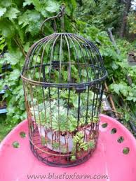 bird cage planters diy projects