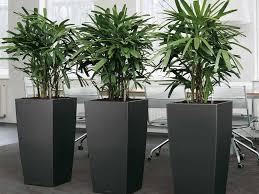 office flower pots. Office Interiors Flower Pots M