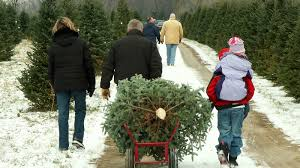 DOWER CHRISTMAS TREE FARM  Welcome To The Dower Christmas Tree FarmChristmas Tree Cutting Nj