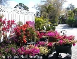 florida vegetable gardening. Florida Gardening Garden Center With Pots Of Bougainvillea In Bloom Vegetable Forum . Books U