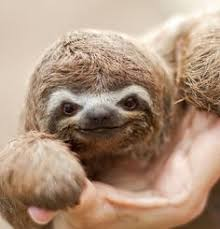 Image result for sloth smile
