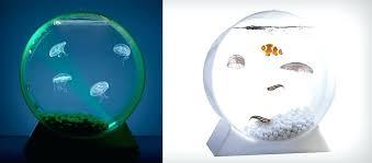 desktop jellyfish aquarium desktop jellyfish tank desktop moon jellyfish tank starter kit