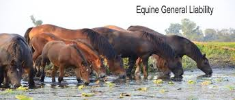 equine general liability insurance