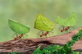 Resultado de imagem para ant