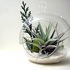 Inspirational Air Plant Terrarium  Home Design Inspirations
